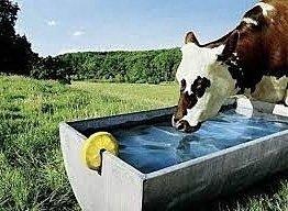 Bedre indtjening i landbruget på dyr der får rent vand